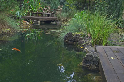Koi Pond Gainsville Florida Completed Looking East