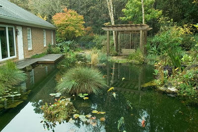 Koi Pond Gainsville Florida Completed Looking West